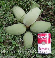 100+ Fresh Paw Paw Fruit Tree Seeds * Pawpaw The Indiana Banana *New Crop Seeds
