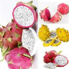 BIN 200 seeds 4kinds mix pitaya dragon fruit Seed Fragrant cactus rare exot Y3X0