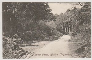 Devon postcard - Humber Copse, Haldon, Teignmouth (A2687)