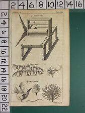1754 ANTIQUE PRINT ~ ROLLING-PRESS ~ POINCIANA PULSATILLA BOTANY