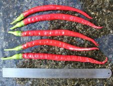 100 SUPER GIGANTE LUNGO semi di peperoncino Biologica Chili Red hot Pepper sementi per piantare