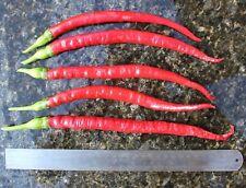 100 Super Gigante largo Chilli Chili Orgánico Semillas Red Hot Pepper semillas para plantar