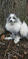 Taxidermy mount pearl platinum whitemark fox