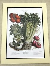 Kitchen Garden Print Chili Peppers Green Peas Tomatoes French Vilmorin Andrieux