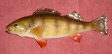 Yellow Perch Mount ..Fish Taxidermy ... Fishing