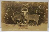 Madison Maine Good Hunting, Family of Deer   RPPC Real Photo Postcard A20