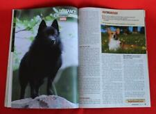Rare & Collectible ~ Schipperke Profile ~ Dog Fancy Magazine ~ October 2009