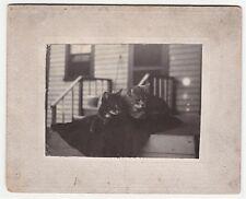 Cute ca 1890 Victorian Photo of Kitty Cats - Homemade Amateur - Upstate NY
