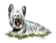 Skye Terrier Watercolor Dog 8 x 10 Art Print by Artist Djr