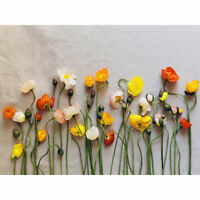 Ahmed Flower Arrangement Large Wall Art Print