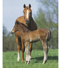 NEW BEAUTIFUL LARGE HORSE AND FOAL FOR QUILTS HOME DECOR & OTHER CRAFTS #4