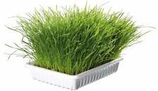 6 x Softgras Schale Schale/ca. 6 x 100 g Katze Vitamine Gras Katzengras