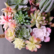 Succulents Floral Plant Artificial Cactus Home Garden Office Plant Decoration
