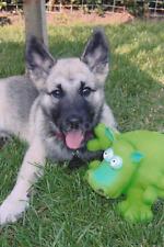 DOG + Hippo FOUND PHOTO Color FREE SHIPPING Original Snapshot VINTAGE 710 19
