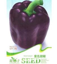 Purple Sweet Pepper Seed Capsicum Organic Vegetable ~1 Pack 8 Seeds~