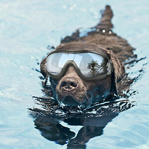 Dog Goggles for Big Dog Glass Windproof Dust Protection Sun Glasses Eyewear