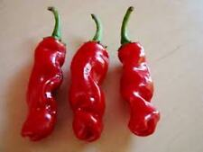 PEPERONCINO PETER PEPPER, CHILI, PEPPER, HOT, FRUTTATO, RARO, SEMI, SEEDS
