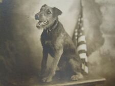 ANTIQUE 1914 AMERICAN FLAG DOG ARTISTIC PHOTO OLD IL VERNACULAR RPPC PHOTOGRAPHY