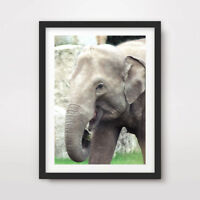 ELEPHANT ANIMAL WILDLIFE PHOTOGRAPHY ART PRINT Poster Nature 10SIZE Wall Picture