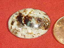 BUTW siberian astrophylite lapidary cabochon 9765A