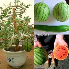30 pcs Dwarf Watermelon seed Little Baby Flower citrullus lanatus watermelon Gre