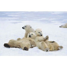 POLAR BEAR PLAYTIME POSTER - 24x36 SHRINK WRAPPED NATURE MOM BABY CUTE 3737