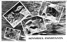 B22258 Fish Peche Romania Constanta