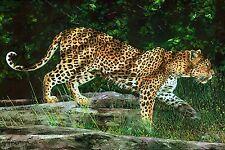 Splendido pannello Leopardo ** Paesaggio Arte Quilting/Filettatura Pittura/Ricamato 21377