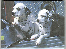 Dalmatian Puppy List Pads ...Two Pups on Firetruck step ...2  pads .. 100 sheets