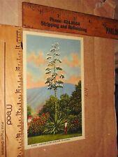 Boy Century Plant Bloom California Linen Sunset Mountain Flower Huge garden kid