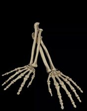 Halloween Skeleton Arm Set Cemetery Graveyard Decoration Haunted Attraction Prop