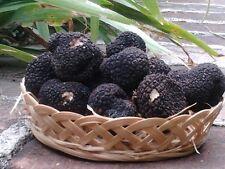 Fresh black truffles italian.Precious T.Aestivum 200g. 7,05oz.Mushrooms Scorzone
