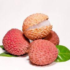 10PCs New Succulent Plants Litchi Seeds Tropical Fruit Tree Bonsai Home Garden