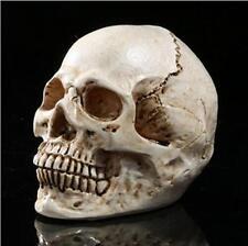 Homosapiens Skull Statue Figurine Human Shaped Skeleton Head Halloween Decor X @
