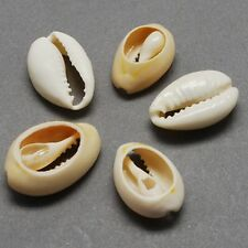 100 x Natural Sea Shell Beads Cowry Cowrie Tribal  Craft 22-23mm(BSHE-Q296-1)