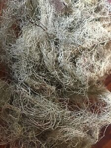 SURVIVAL Moss Antibiotics, Herbal Tinctures, Old Man's Beard (USNEA) Lichen, USA