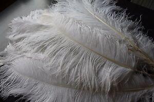 10 piec., White Ostrich Feathers, 70-80 cm long, 20-30 cm wide