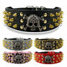 Skull Gold Spiked Studded Leather Dog Collars for Medium Large Breeds Rottweiler
