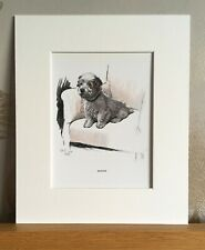 More details for vintage cecil aldin sealyham puppy print book plate 1930 - mounted