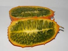 Cucumis metuliferus Kiwano Horned Melon Seeds!