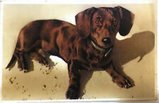 Alfred Mainzer, Dachshund Dog, Vintage Postcard