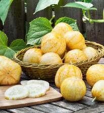 2x large plants CUCUMBER 'Lemon' unusual rare yellow vegetable FREE DEL> £25