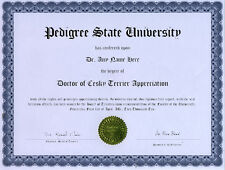 Doctor Cesky Terrier Novelty Diploma Puppy Dog Lover