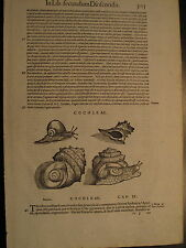 MATTHIOLI, 1500, PESCI,, ITTICA, CONCHIGLIE, CHIOCCIOLE , STAMPA ANTICA