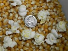 Mushroom popcorn kernels kernals; easy, homemade kettle corn !Free Shipping!