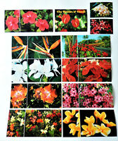 9 Hawaii Hawaiian flowers postcard post card lot with mini pictures