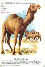 DROMADAIRE Dromedary CHAMEAU CAMEL CAMELUS PLAYING CARD CARTE A JOUER OLD ANCIEN