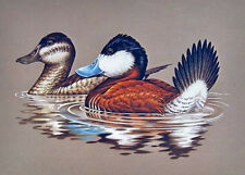 1981 Federal Duck Stamp Print, Ruddy Ducks by John Wilson, in Orig. Folio, MINT