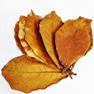 25 Indian Almond Leaves Catappa Dried 14cm-18cm for Betta Fish Aquarium Shrimp