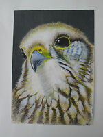 Hand drawn animal pictures, Original Contemporary KESTREL